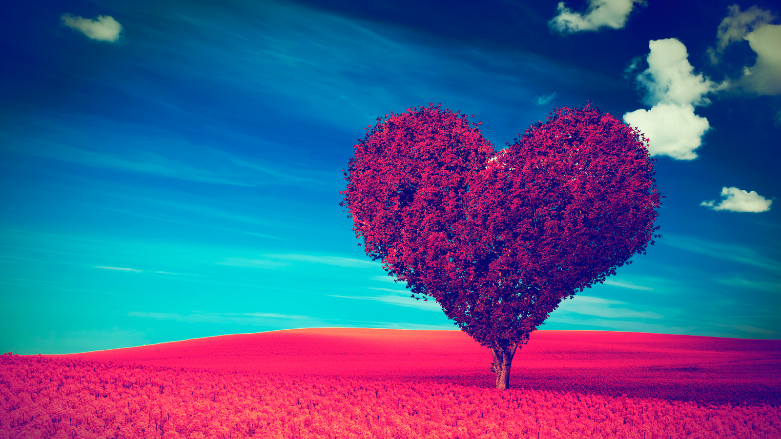 bigstock-Heart-shape-tree-with-red-leav-78243893