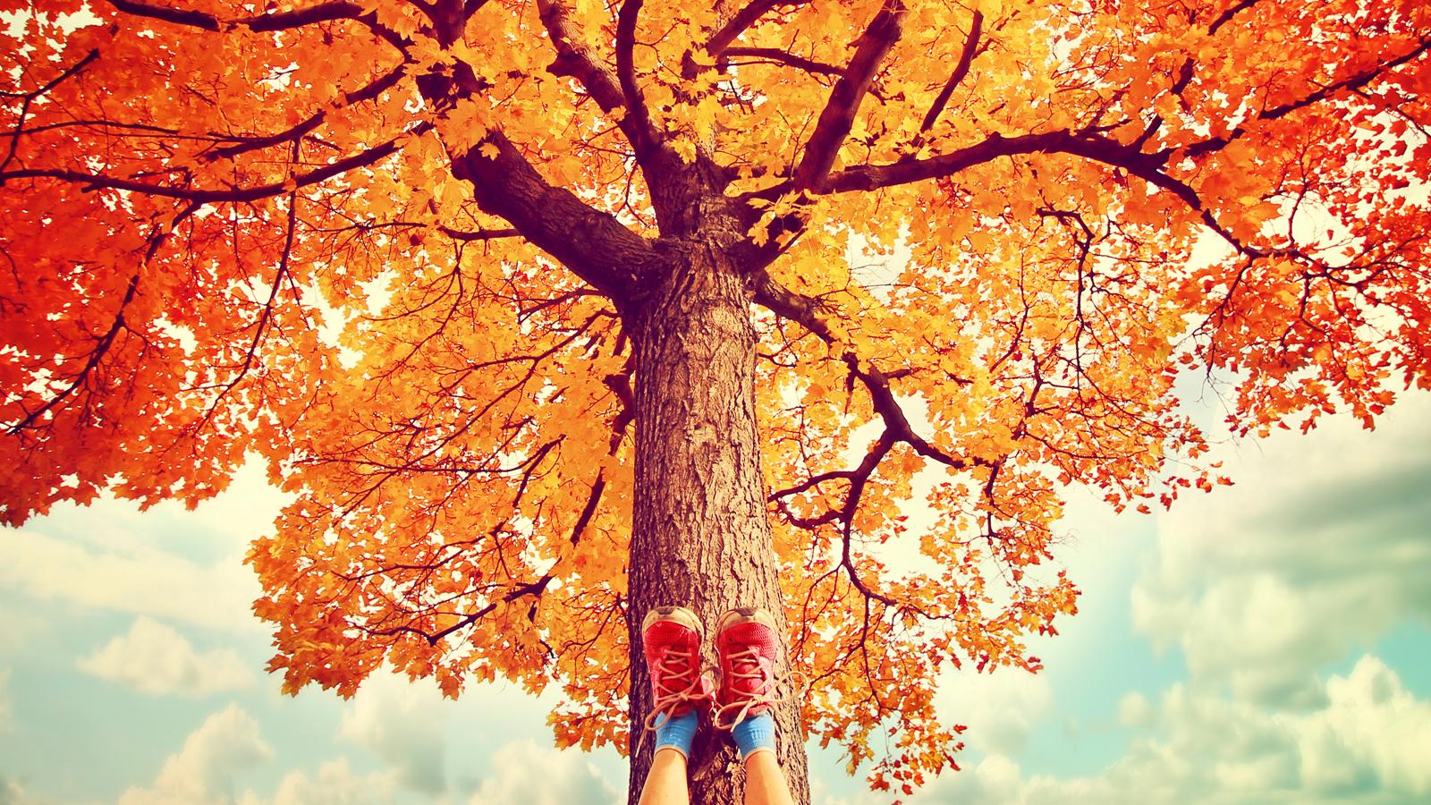 bigstock-feet-resting-on-a-tree-trunk-d-68996359_1600x900